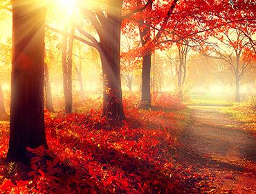 214020196 תמונת טפט סתיו שלכת ביער